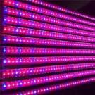 ФИТО лампа светодиодная тепличная Т8 600мм G13 9Вт