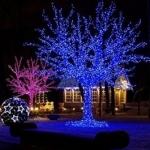 Деревья светящиеся